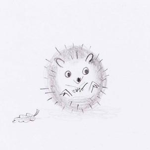Hedgehog sketch.jpg