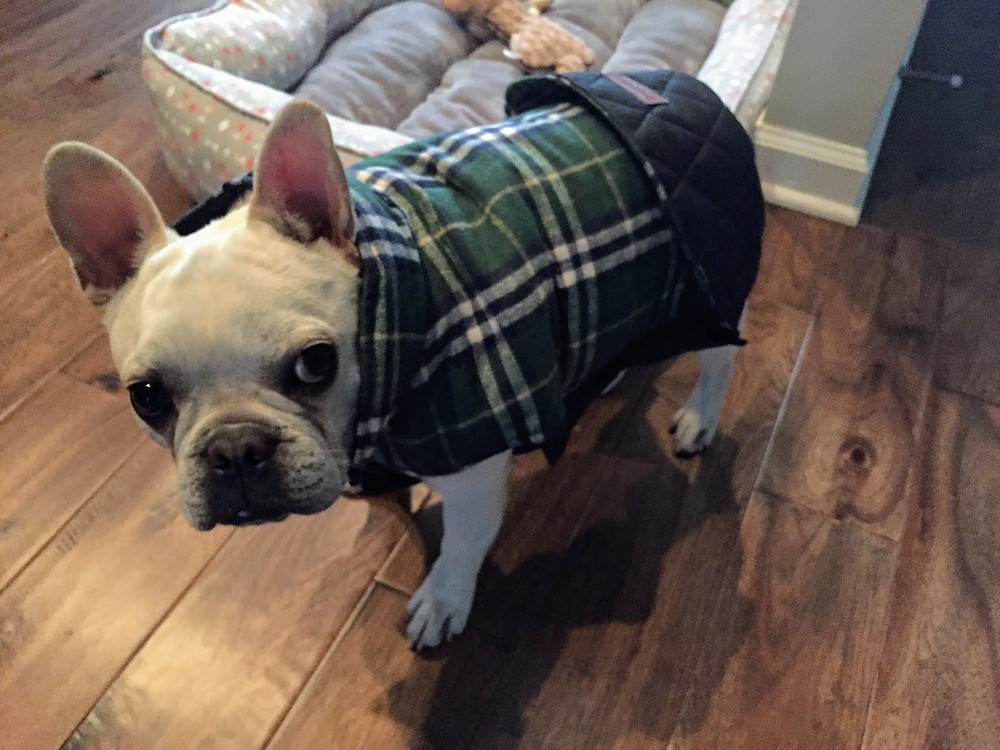 Pudge in his cute jacket