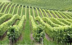 sculptured-vines-1341872