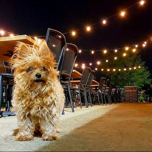 Ted on the patio.jpg