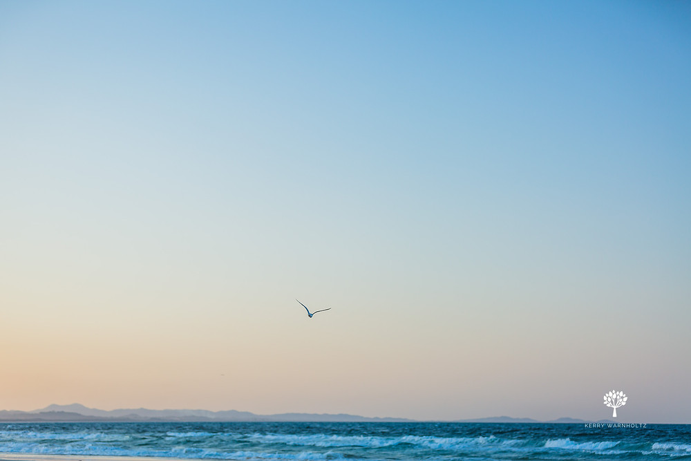 beach, seagull, sunset, ocean, landscapes, landscape photography