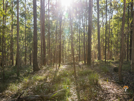 Daisy Hill Conservation Park & Winds of Change