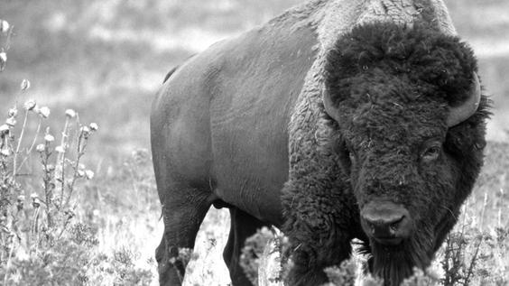 Rewilding Symposium 2019