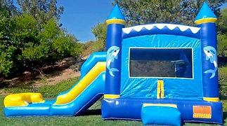 dolphin bounce house.jpg