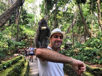 Sacred Monkey Forest Sanctuary. Ubud, Bali.