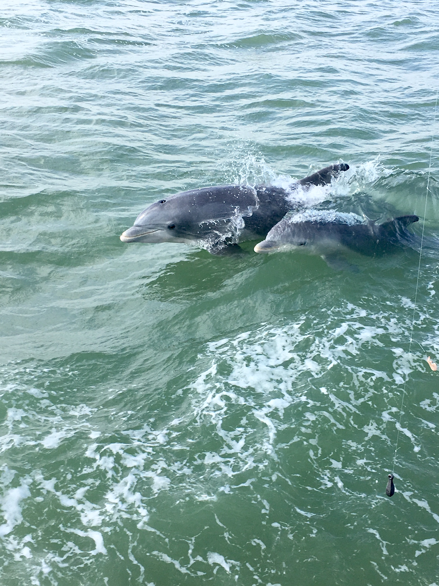 Watching the dolphins from a boat in