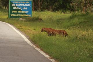 Wildlife Movement