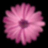 flower-logo-vector-400x400.png