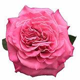 free-flower-garden-design-1.jpg