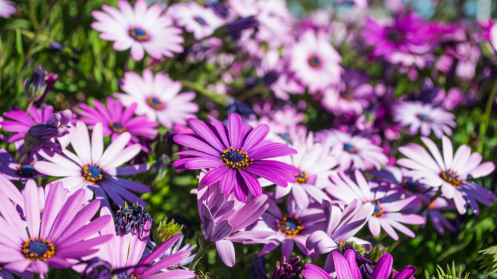 banner violeta.png