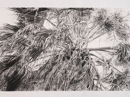 Catherine Ruane, an artist whose work observes the resilience of 'witness' trees and human beings.