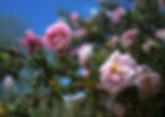 Miyata_064.jpg