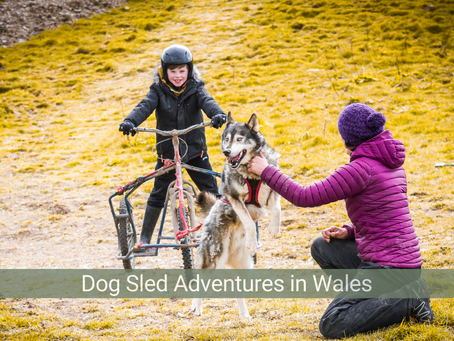 Watch our Dog Sledding in Wales video