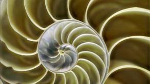 Seray Şahsuvar yazdı: Biyomimikri ile Geliştirilen Teknolojiler ve Biyomimikri'nin Geleceği