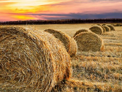 """Yener Ataseven: """"Koronavirüs Günlerinde Tarımın ve Gıdanın Önemi Anlaşılıyor mu?"""""""
