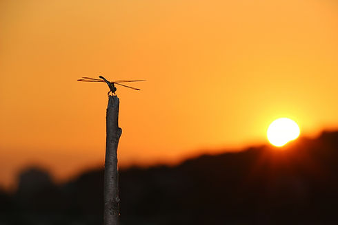 dragonfly-531586_1920.jpeg