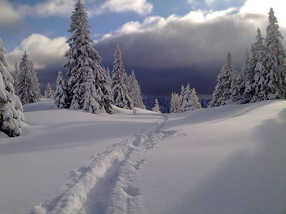 Magie des paysages hivernaux