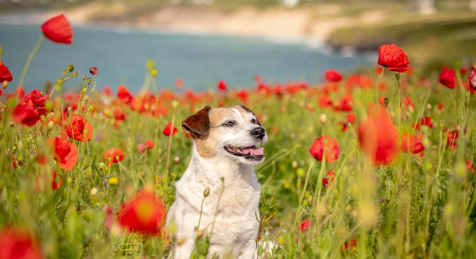 Poppies-20.jpg
