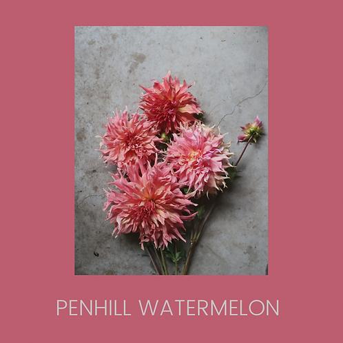 PENHILL WATERMELON