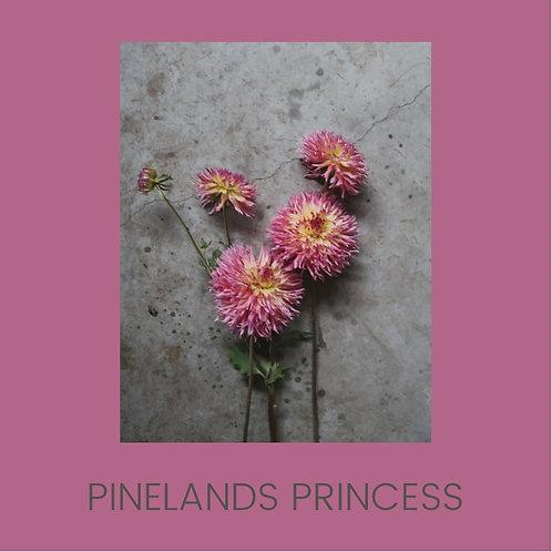 PINELANDS PRINCESS