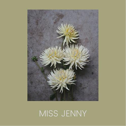 MISS JENNY