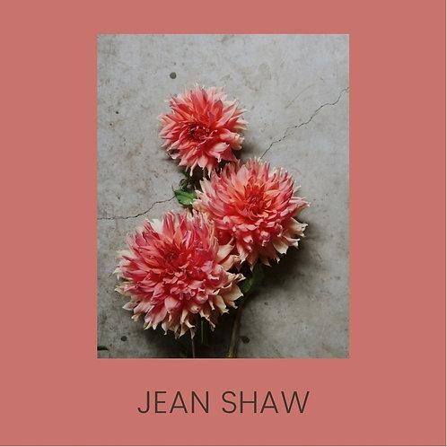 JEAN SHAW
