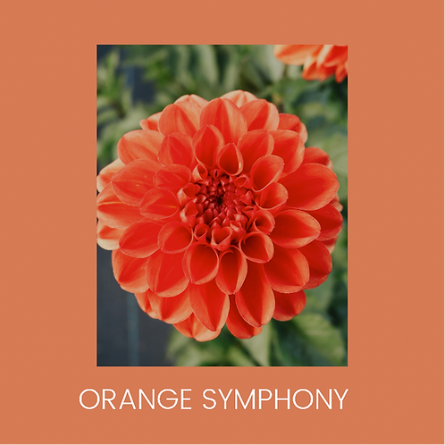 ORANGE SYMPHONY