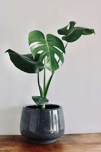 Indoor plant Wanaka