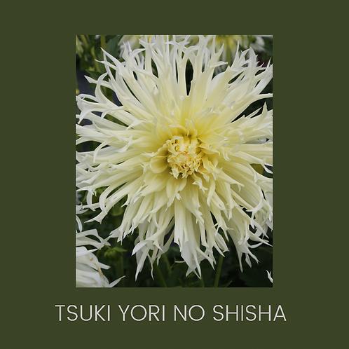 TSUKI YORI N SHISHA