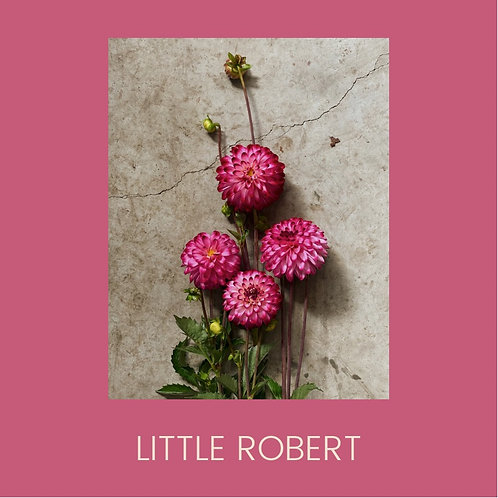LITTLE ROBERT