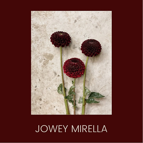 JOWEY MIRELLA
