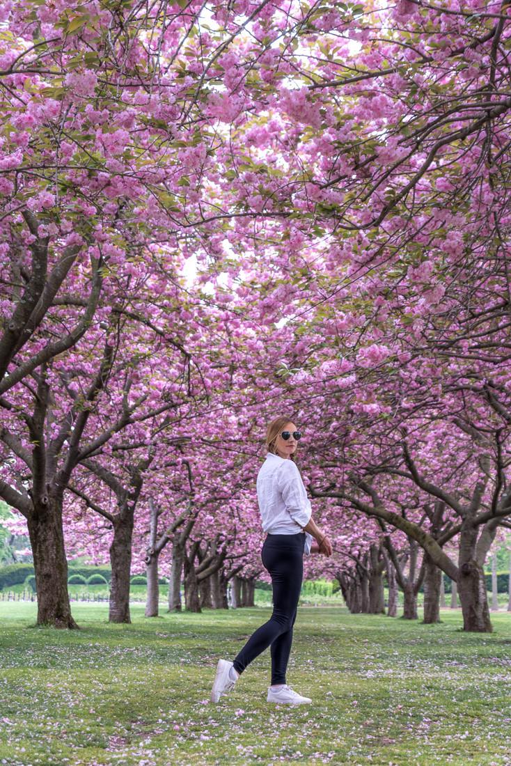 cherry blossom festival NYC Brooklyn botanic garden