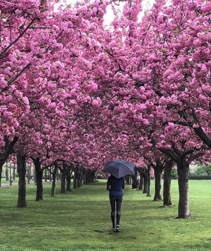 cherry blossom festival NYC.  Cherry Blossom Festival Brooklyn