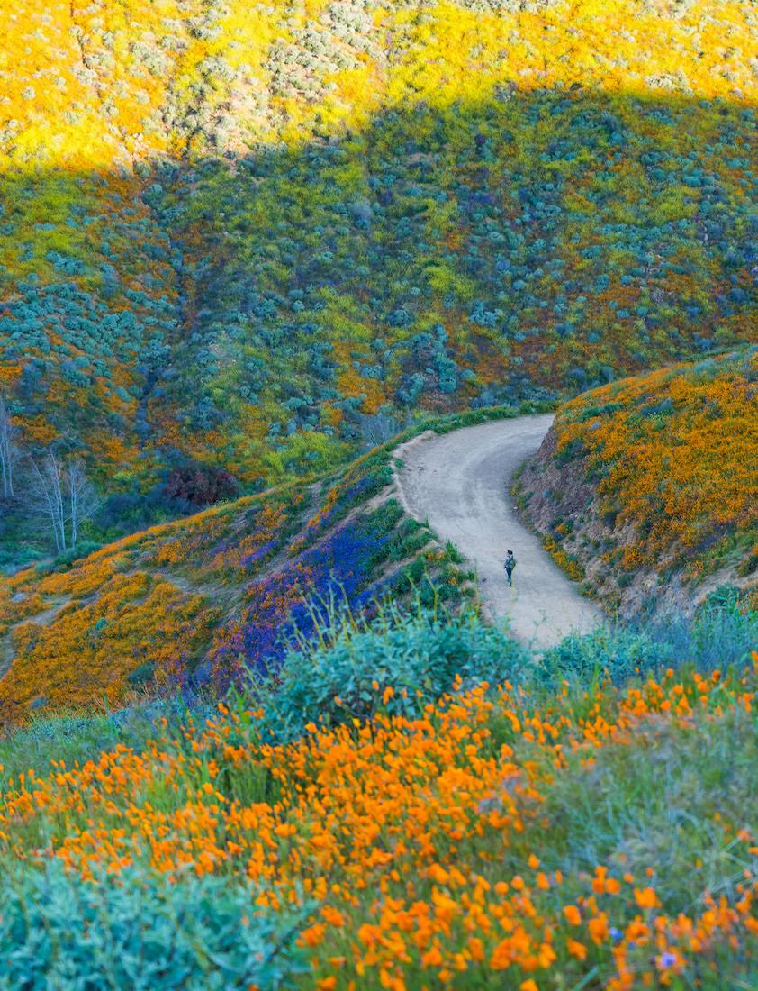 southern california super bloom at walker canyon lake elsinore.