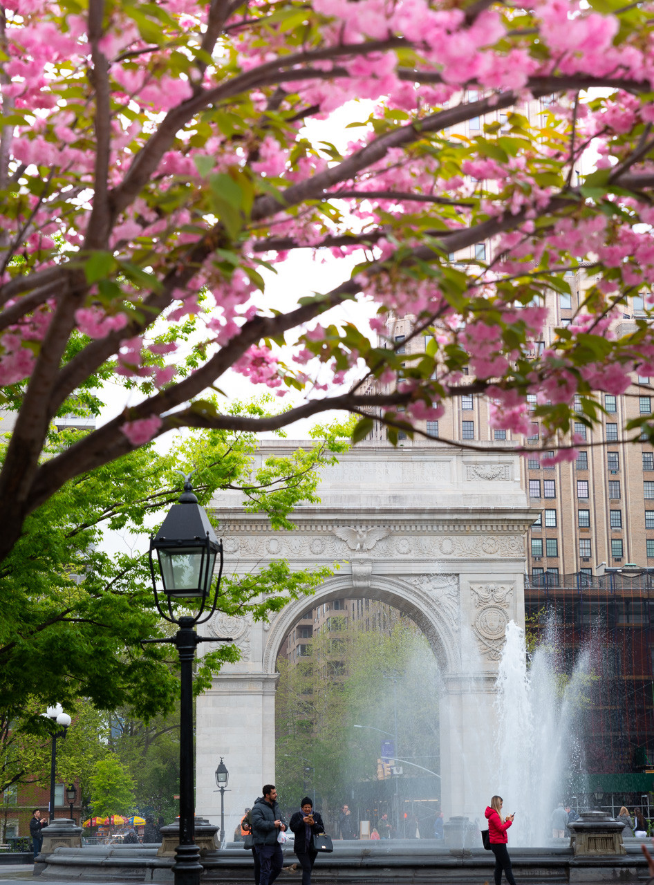 Cherry blossom NYC