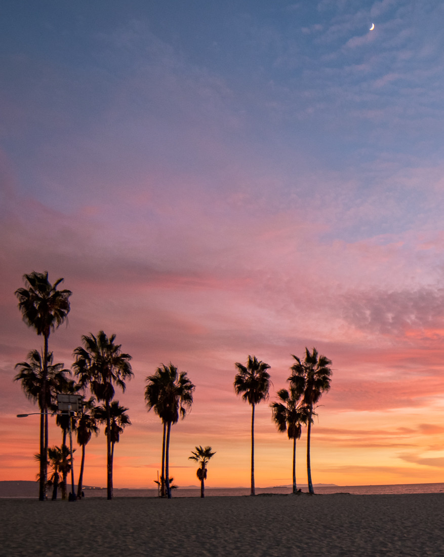 Venice Beach Sunset, Venice Beach Palm trees
