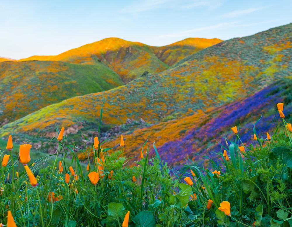 walker canyon poppy fields