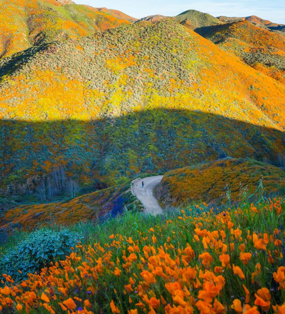 super bloom at walker canyon lake elsinore