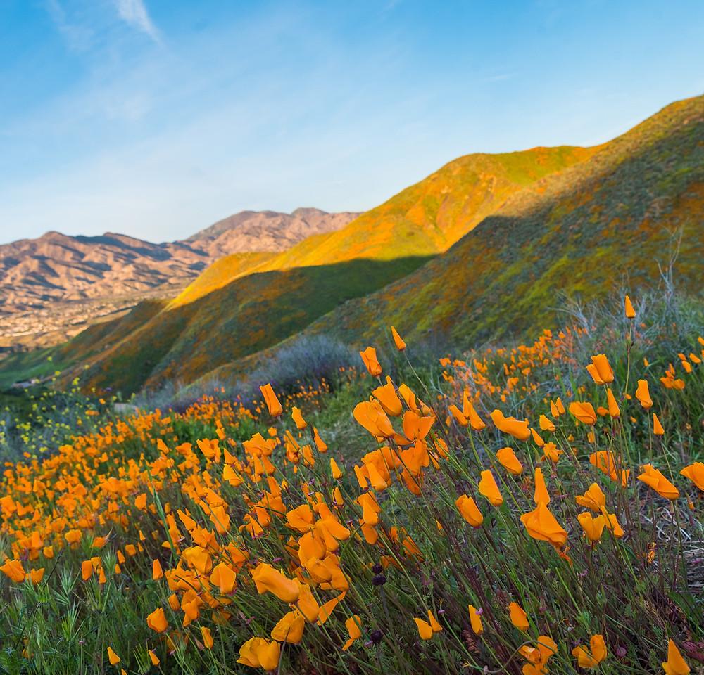 southern california super bloom at walker canyon lake elsinore 2019