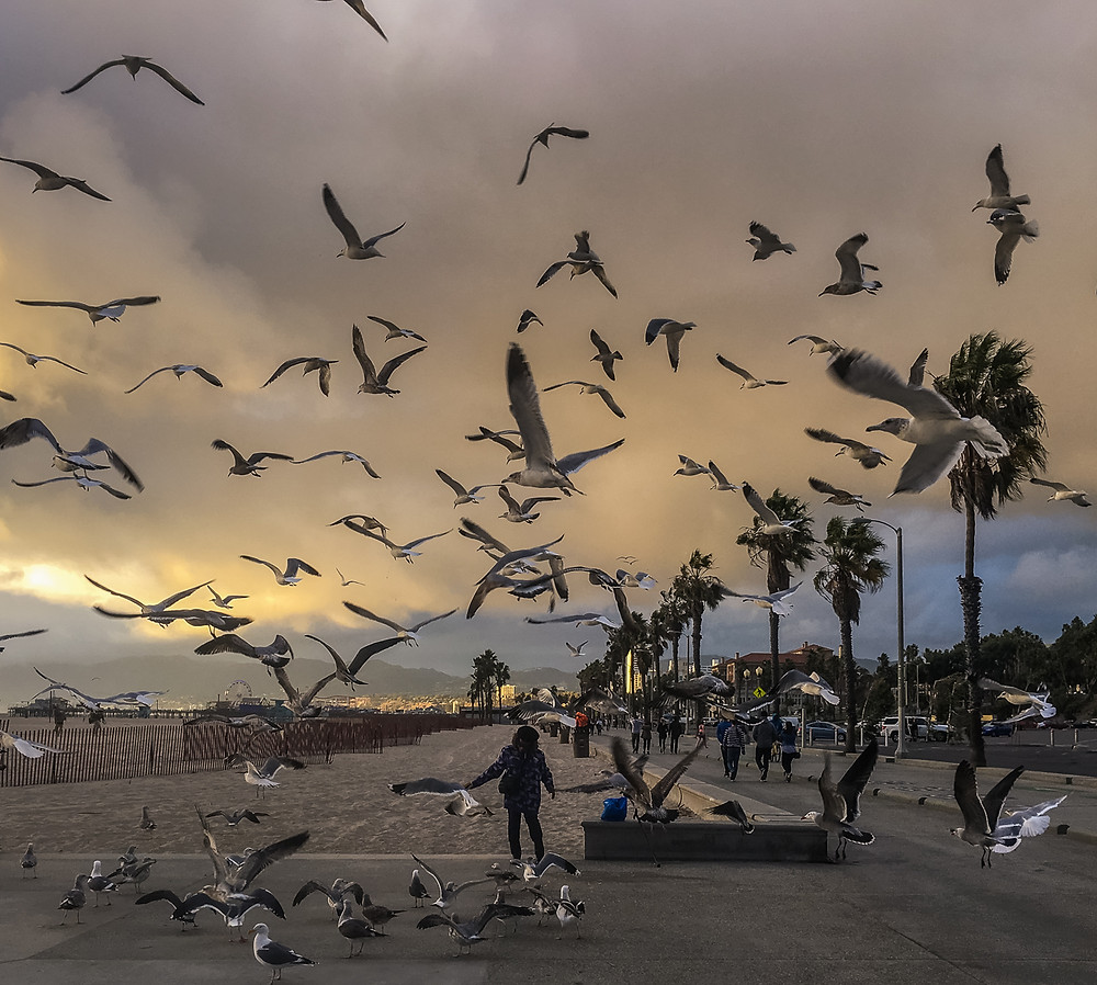Flock of birds at the Santa Monica Bike Path in Santa Monica California