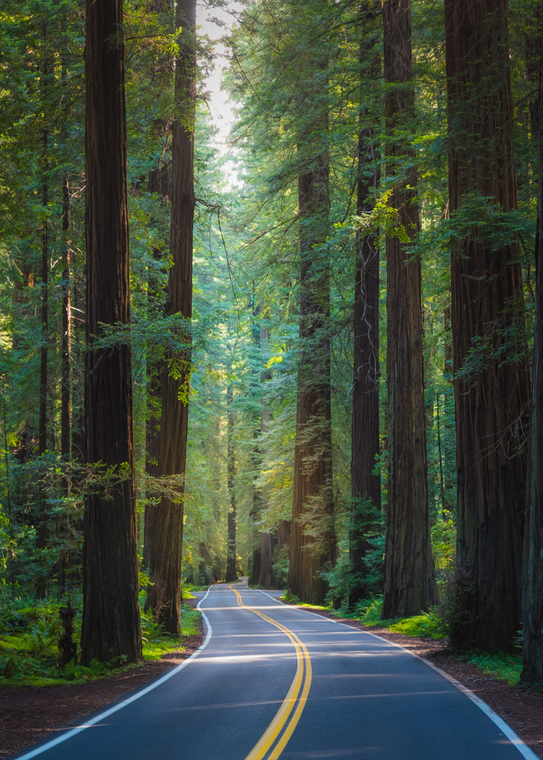 Avenue of the Giants in Humboldt State Park California