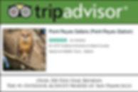 tripadvisor homepage.jpg