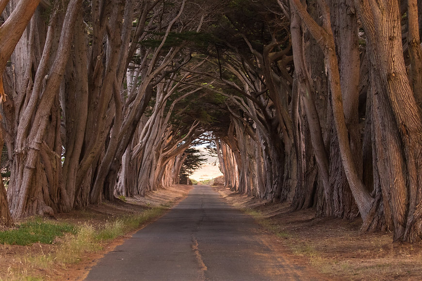 Cypress Tree Tunnel, Point Reyes National Seashore