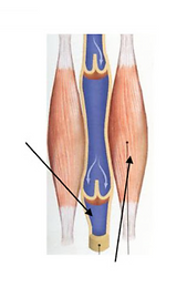 L'électro-stimulation musculaire