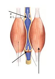 L'électro-stimulation pour éliminer la cellulite