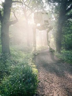 Surrey Walks