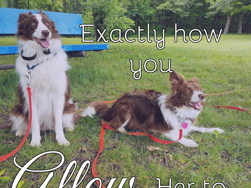 Your Dog Behaves Exactly How You Allow Her to