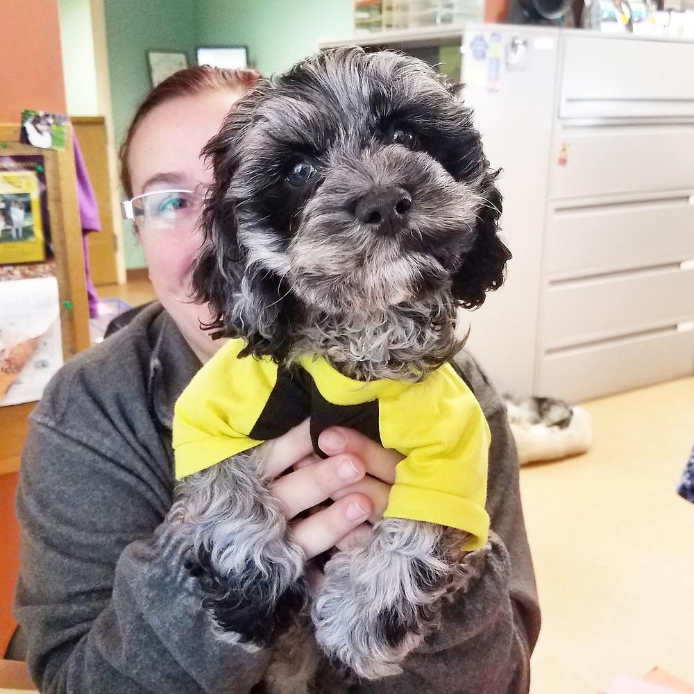 massachusetts dog trainer