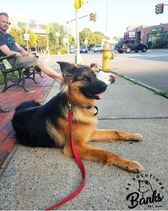 Massachusetts dog training