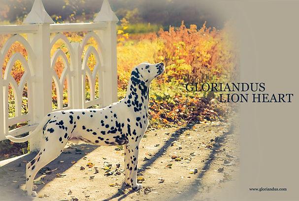 GLORIANDUS LION HEART